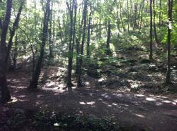 Broceliande forest